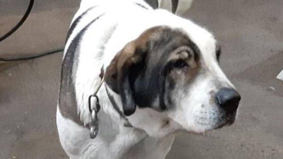 Wem gehört dieser Hund? © Polizeidirektion Bautzen