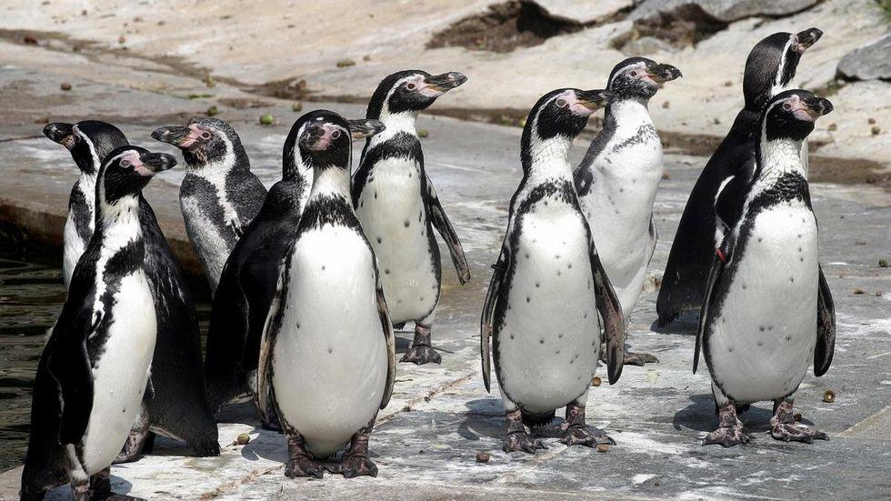 Mit dem Geld soll das Pinguingehege saniert werden. © Zoo Hoyerswerda